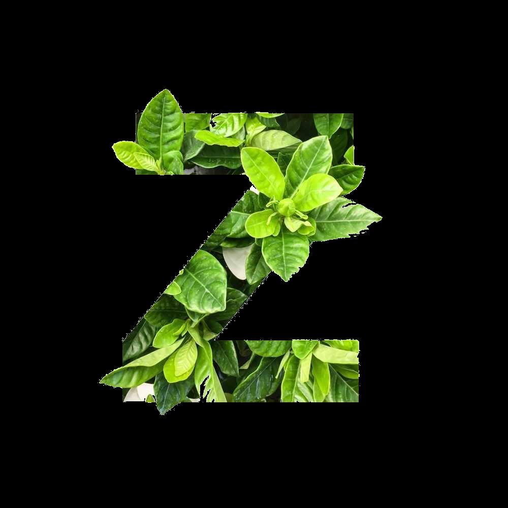 Zöld Misszió - Kecskemét